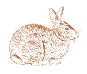 plot-bunny